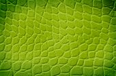 foto of green snake  - Green snake texture with space for text - JPG
