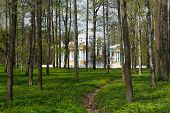 stock photo of tsarskoe  - Pavilion in Catherine - JPG