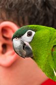 Parrot and the human ear