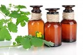 stock photo of celandine  - Blooming Celandine with medicine bottles isolated on white - JPG