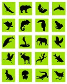 image of greenpeace  - vector silhouette of the animal in green icons - JPG