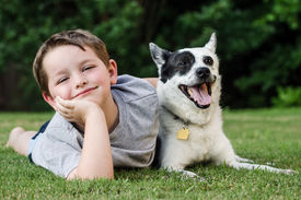 image of heeler  - Child playing with his pet dog - JPG