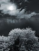 picture of moonlit  - moonlit night and clouds on night sky - JPG