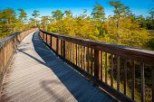 foto of collier  - Wooden bridge in a forest Kirby Storter Roadside Park Ochopee Collier County Florida USA - JPG
