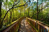 picture of collier  - Wooden bridge in a forest Kirby Storter Roadside Park Ochopee Collier County Florida USA - JPG