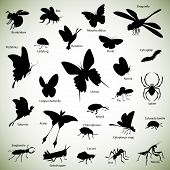 picture of humble  - Set of insect silhouettes on abstract background - JPG