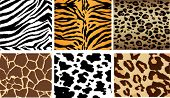 Animal Print tileable backgrounds, sides match up to tile together to make large backgrounds