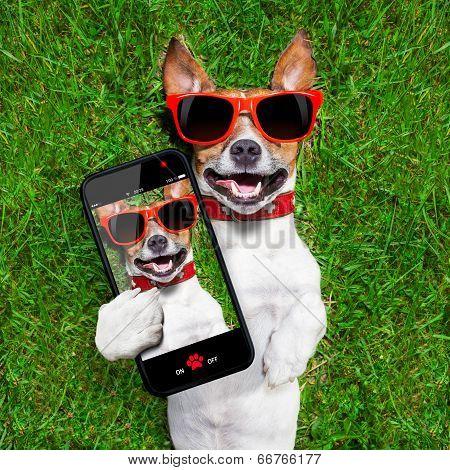 Funny Selfie Dog poster