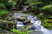 stock photo of trout fishing  - A picturesque mountain trout stream located in central Virginia - JPG