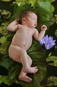 picture of baby frog  - Baby on green leaves floating in a water lily pond with lotus flowers - JPG