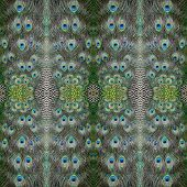 stock photo of indian peafowl  - Beautiful Green Peafowl feather background pattern abstract - JPG
