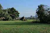 foto of wind blown  - Fallen tree blown over by heavy winds at the park - JPG