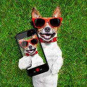 picture of sunbathing  - dog taking a selfie and laughing about that - JPG