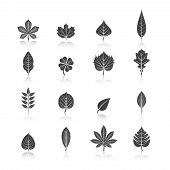picture of marijuana leaf  - Botanic plants eco black icons set with marijuana cannabis trefoil trees leaves silhouette abstract isolated vector illustration - JPG