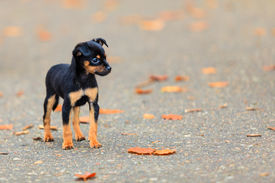 picture of little puppy  - Animals homeless - JPG