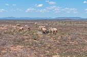 foto of arid  - Typical arid Karoo landscape between Hanover and Richmond - JPG