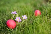 stock photo of primrose  - Red easter egg next to primrose in the grass - JPG