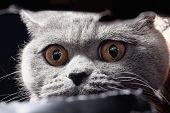 pic of peep hole  - Yellow cat - JPG