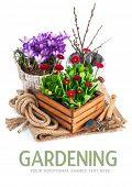 stock photo of bucket  - Spring flowers in wooden bucket with garden tools - JPG