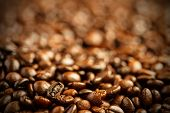 image of coffee crop  - coffee beans background - JPG