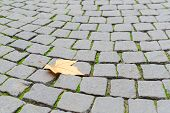 foto of cobblestone  - Single autumn maple yellow fallen leaf fall on old paved cobblestone pavement background with free copy - JPG