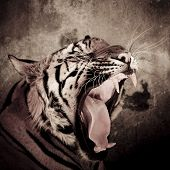 stock photo of tigress  - close up of a tiger - JPG