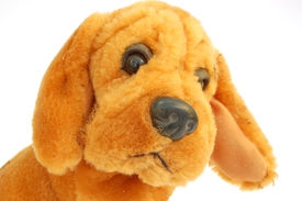 picture of stuffed animals  - photo of cute artificial dog on pure white background - JPG