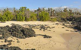 picture of scoria  - Unusual Vegetation on a Tropical Beach on Santa Cruz Island in the Galapagos - JPG