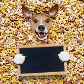 Hungry Dog In Big  Food Mound poster