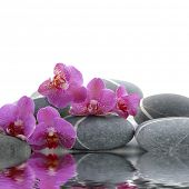 stock photo of gladiola  - Orchid and pebbles with inverted reflection on white background - JPG