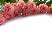 pic of yellow rose  - Floral corner border made from pink roses - JPG