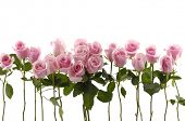 stock photo of white roses  - Beautiful Roses Bouquet - JPG
