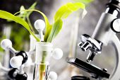 image of genetic engineering  - Ecology laboratory - JPG