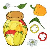 Collection Of Different Objects. Glass Jar With Home Made Peppers. Hand Drawn Objects Isolated. Vect poster