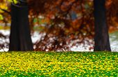 Yellow Colorful Autumn Leaves Fallen On A Green Grass Lawn, Over A Heavy Blurred Bokeh Background Of poster