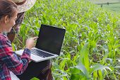 Agronomist Examining Plant In Corn Field, Couple Farmer And Researcher Analyzing Corn Plant. poster