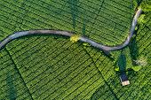 Aerial View Of Beautiful Curve Road And Cottage In Green Corn Field. Abstract Geometric Shapes Of Ag poster