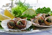 picture of escargot  - Gourmet - JPG