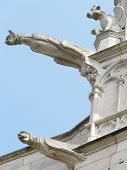 pic of poitiers  - Gargoyles on the roof and walls of a church in France - JPG