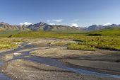 image of denali national park  - savage creek in denali national park in summer - JPG