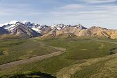 picture of denali national park  - denali national park scenic view in summer  - JPG