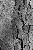 image of afforestation  - Tree bark nature photo with lighting effect - JPG