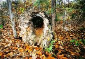 picture of hollow log  - this is a beautiful hollow log especially in the autumn with all the colors around it - JPG