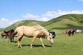 pic of backwoods  - bright sleek horse herd grazing on the green lawn - JPG