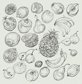 foto of freehand drawing  - Set of fruits - JPG