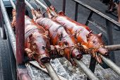 stock photo of spit-roast  - 3 Roasted suckling pigs on a spit on a trailer - JPG
