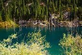 picture of shan  - Kaindy Lake in Tien Shan mountain Kazakhstan - JPG