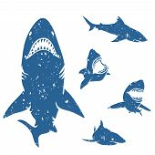 picture of great white shark  - Set of big sharks with grunge style - JPG