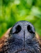 foto of blue animal  - Dog snout - JPG
