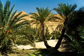stock photo of wanton  - colorful oasis on the sahara desert in tunisia - JPG